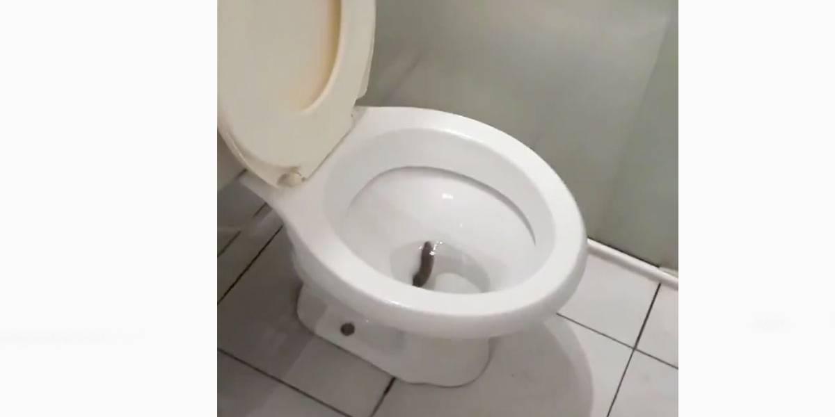 Vídeo: Rapaz filma cobra saindo do vaso sanitário