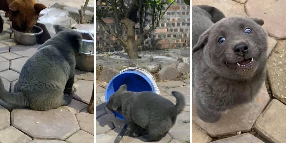 Gato ou cachorro? O bichinho que gerou polêmica nas redes sociais