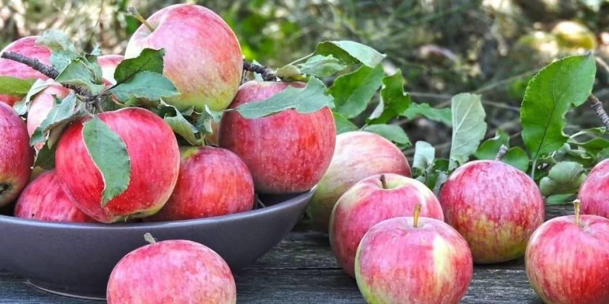 Frutas de março: faça a escolha certa para a época