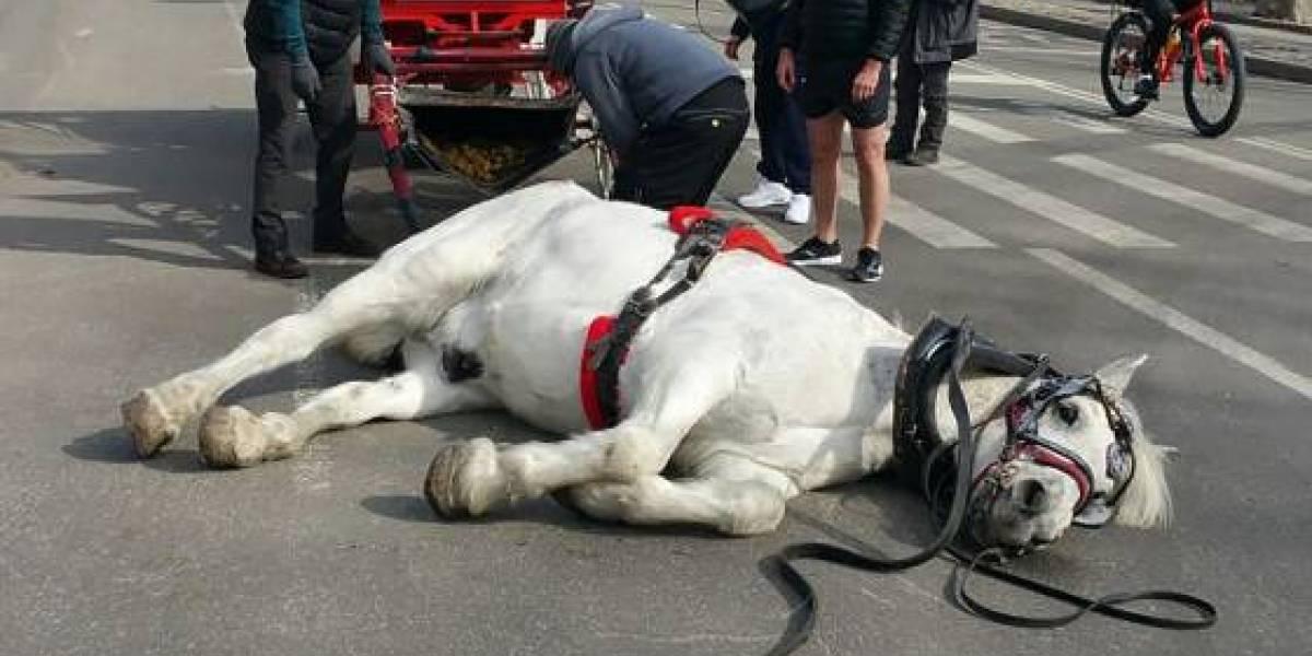 EUA: Cavalo desaba ao puxar carruagem e morre horas depois