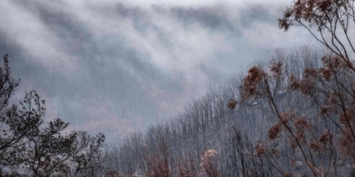 """No se rindieron y por fin lo lograron: luego de más de 240 días de lucha, estado australiano se encuentra """"libre"""" de incendios forestales"""