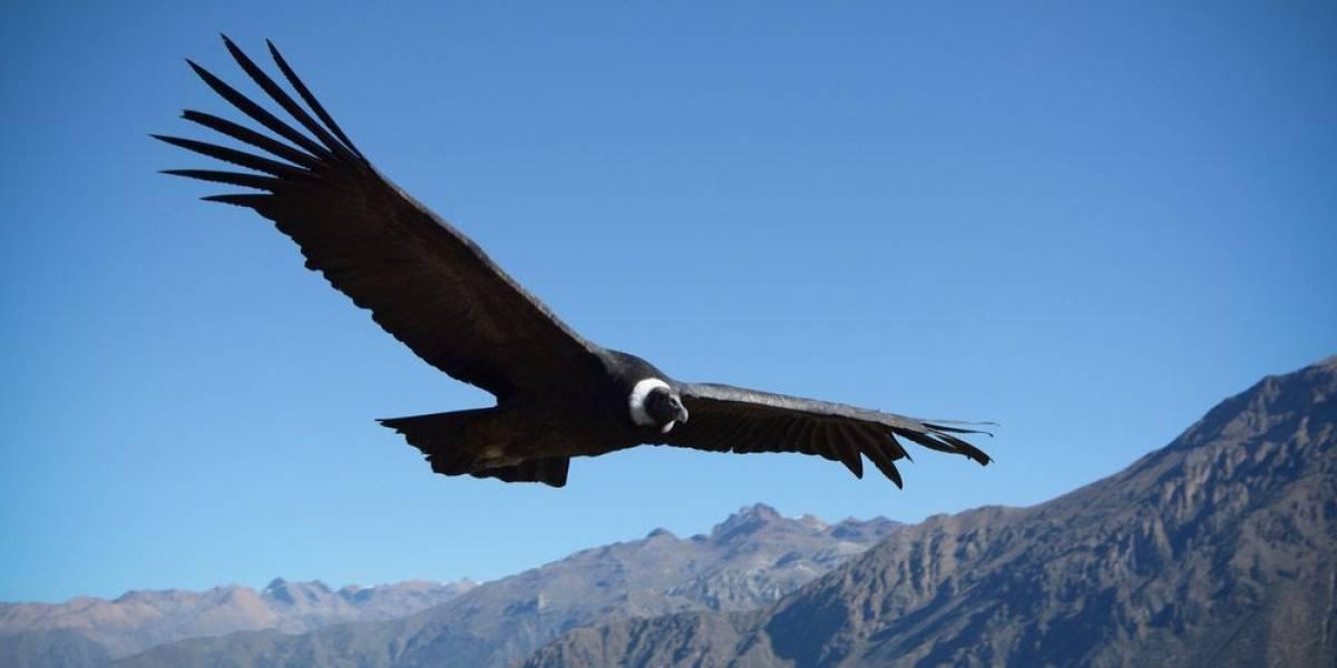 Esto es maldad: encuentran a cinco ejemplares de aves silvestres protegidas muertas en región de O'Higgins