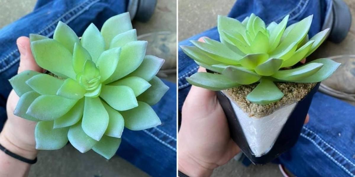 """Regó la """"planta perfecta"""" durante 2 años: se dio cuenta de que no valió la pena"""