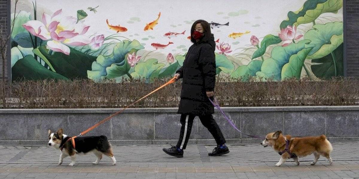Perros y gatos no pueden transmitir el coronavirus a humanos