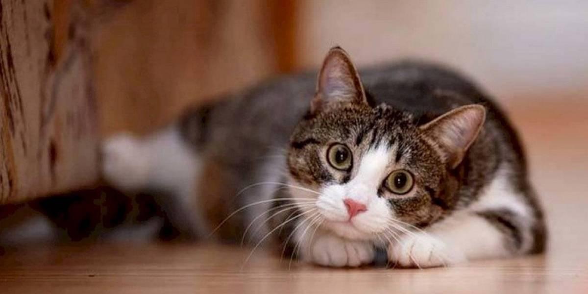 ¿Qué dicen los expertos sobre si las mascotas se pueden contagiar de coronavirus?