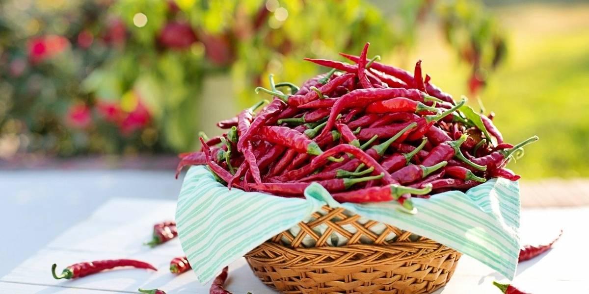 Descubra 3 benefícios da comida picante
