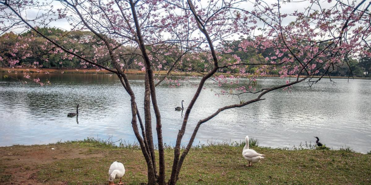 Paulistano vai poder avaliar parques por app
