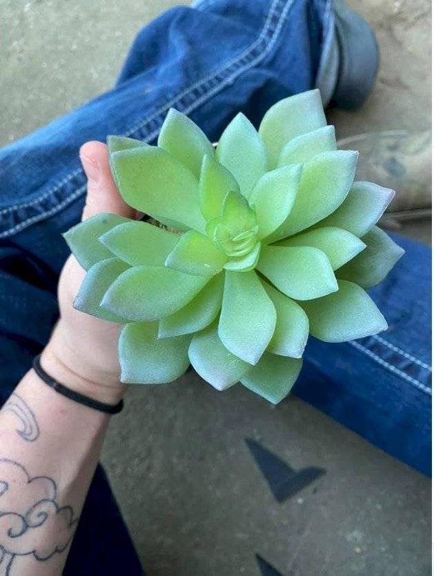 Mujer regó una planta sin darse cuenta que era de plástico