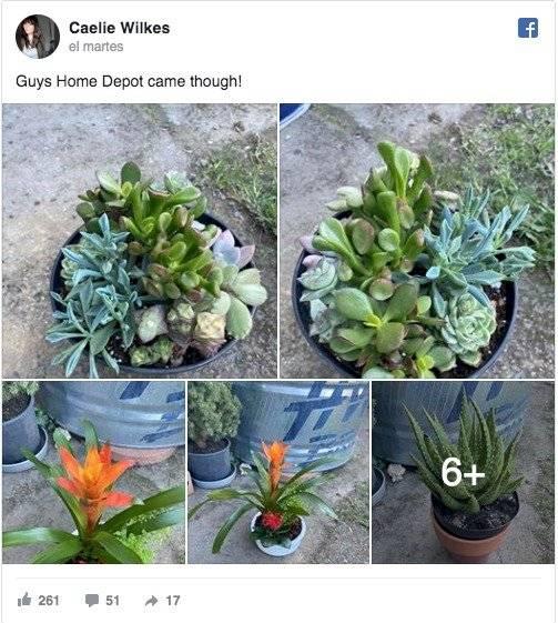 Plantas regaladas a mujer que cuidó un suculenta por dos años