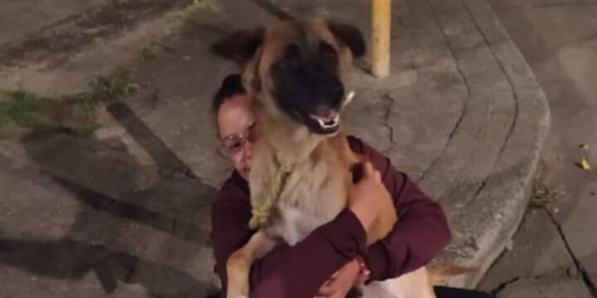 La conmovedora historia de una joven que encontró a su mascota luego de siete años