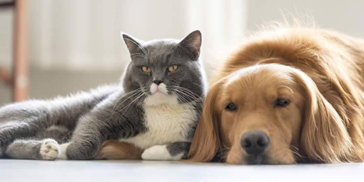 ¿Pueden los perros o gatos contagiarte de Coronavirus?