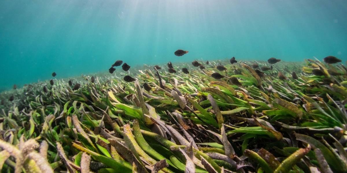 Algas marinas para salvar los océanos del cambio climático