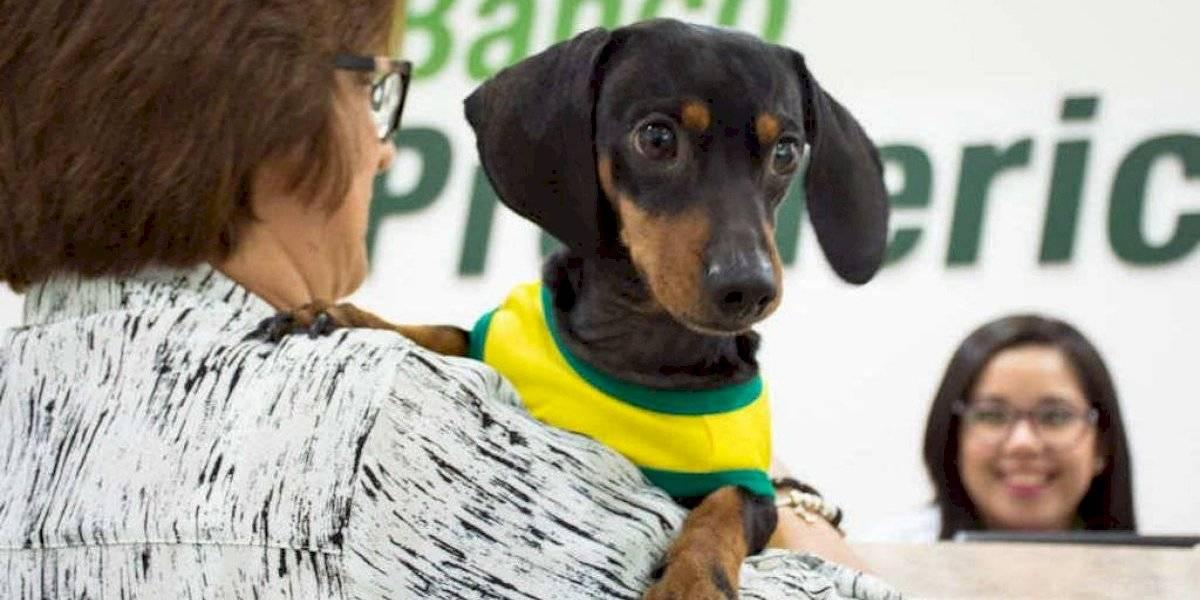 Banco Promerica inaugura nueva agencia Pet Friendly