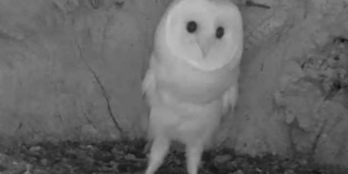 VÍDEO: bebê coruja escuta trovões pela primeira vez e fica muito espantada