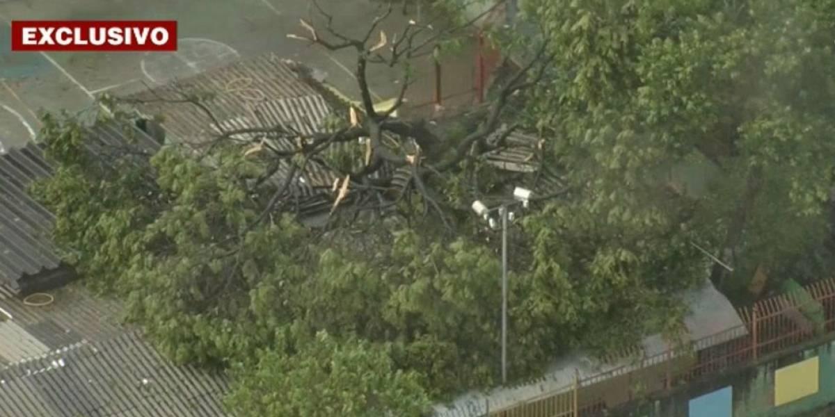 Ao menos 20 crianças são atingidas por queda de árvore em creche na Zona Leste