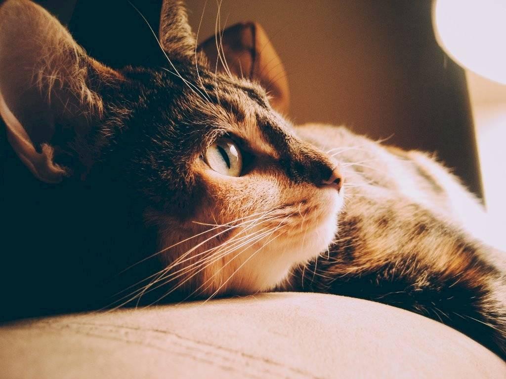 Los gatos son una de las mascotas más fieles como compañía.