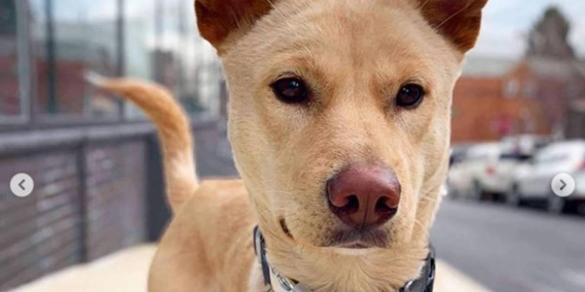 (Video) ¡Enternecedor! Perrita corrió kilómetros tras camioneta que se llevó sus cachorros