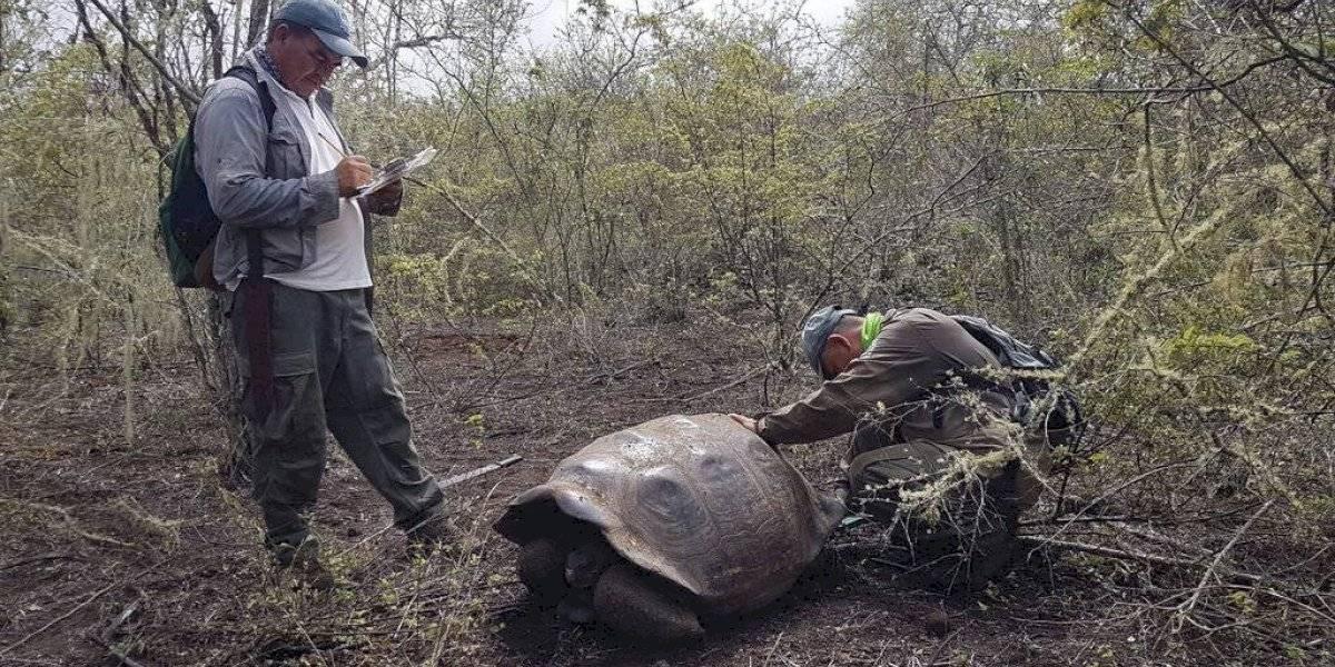 Ecuador confirma hallazgo de tortuga que se creía extinta