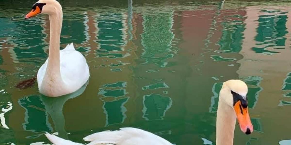¡El planeta se recupera! Aguas cristalinas en Venecia sorprenden al mundo