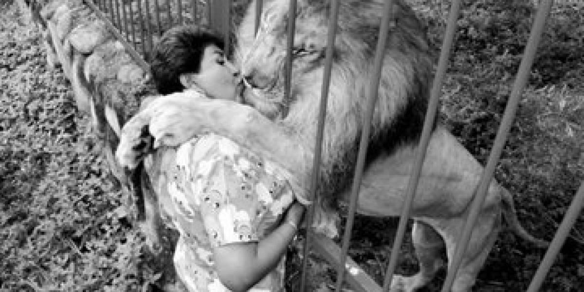 Emotivo video con el que cuidadora de Júpiter informa la muerte del león