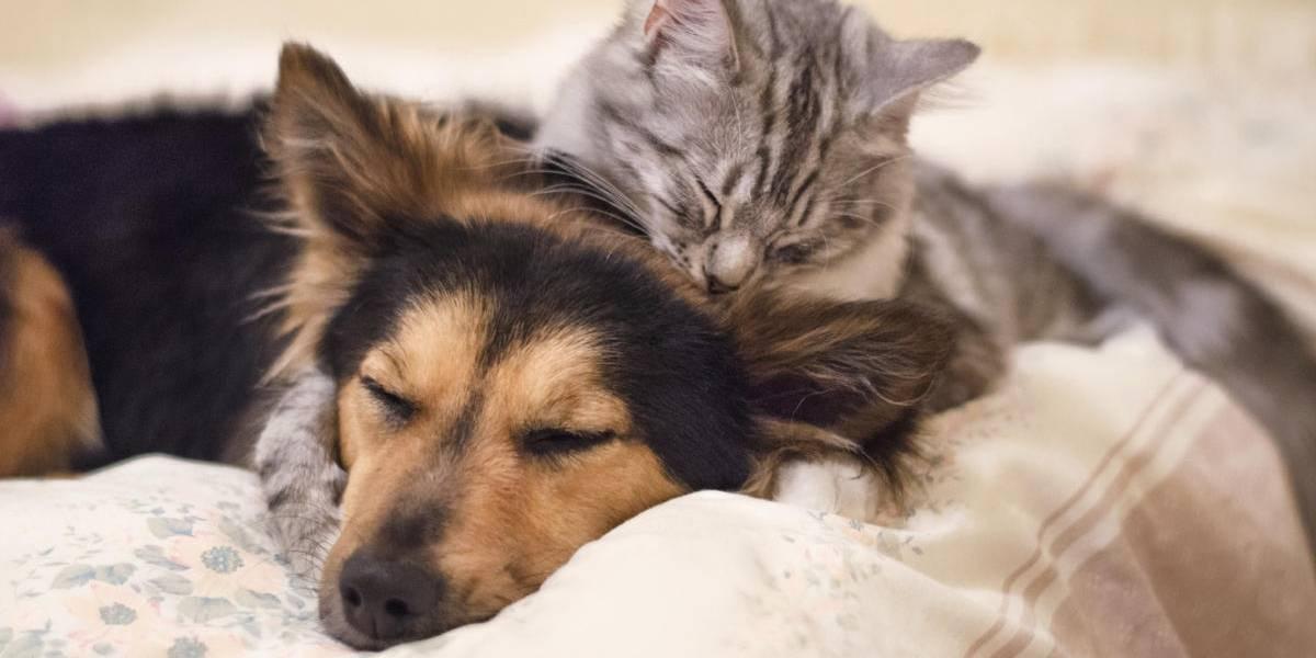 ¿Tienes mascotas? Sigue estos consejos para su cuidado en tiempos de pandemia