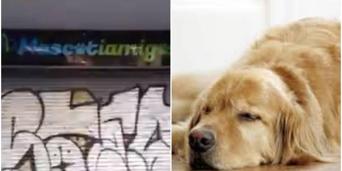 Denuncian animales encerrados en negocios ubicados en la Avenida Caracas de Bogotá