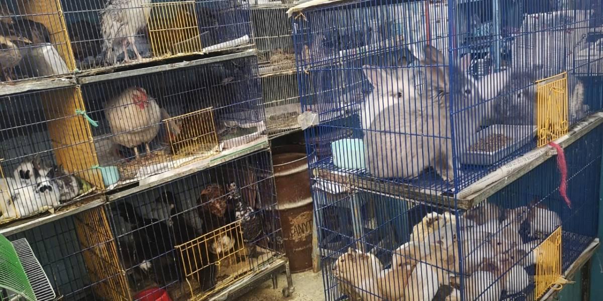 Animales hacinados, maltratados y muertos, entre los hallazgos en la plaza de El Restrepo