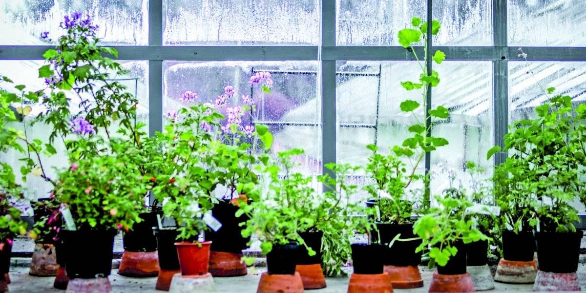 Cómo crear un huerto vertical en casa