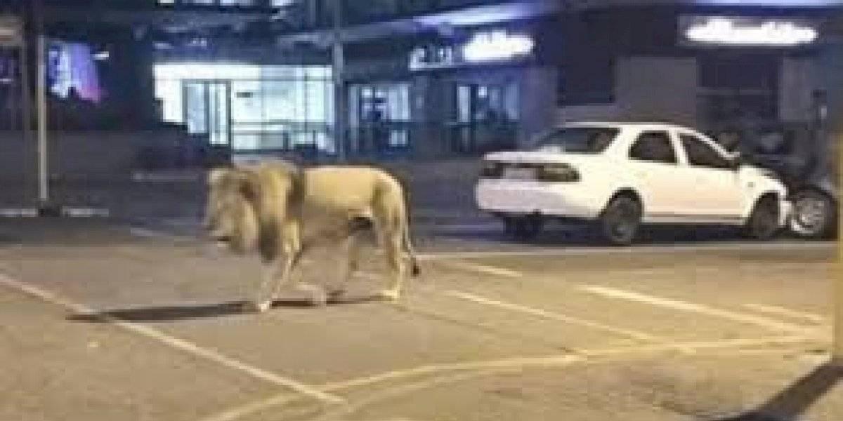 """Coronavirus: la verdad detrás de los """"leones sueltos"""" para vigilar cuarentena en Rusia"""
