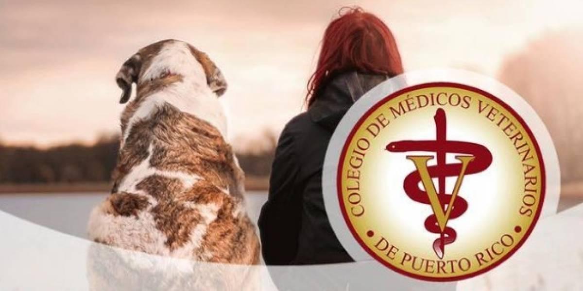 Colegio de Médicos Veterinarios ofrece cursos de Educación Humanitaria en línea