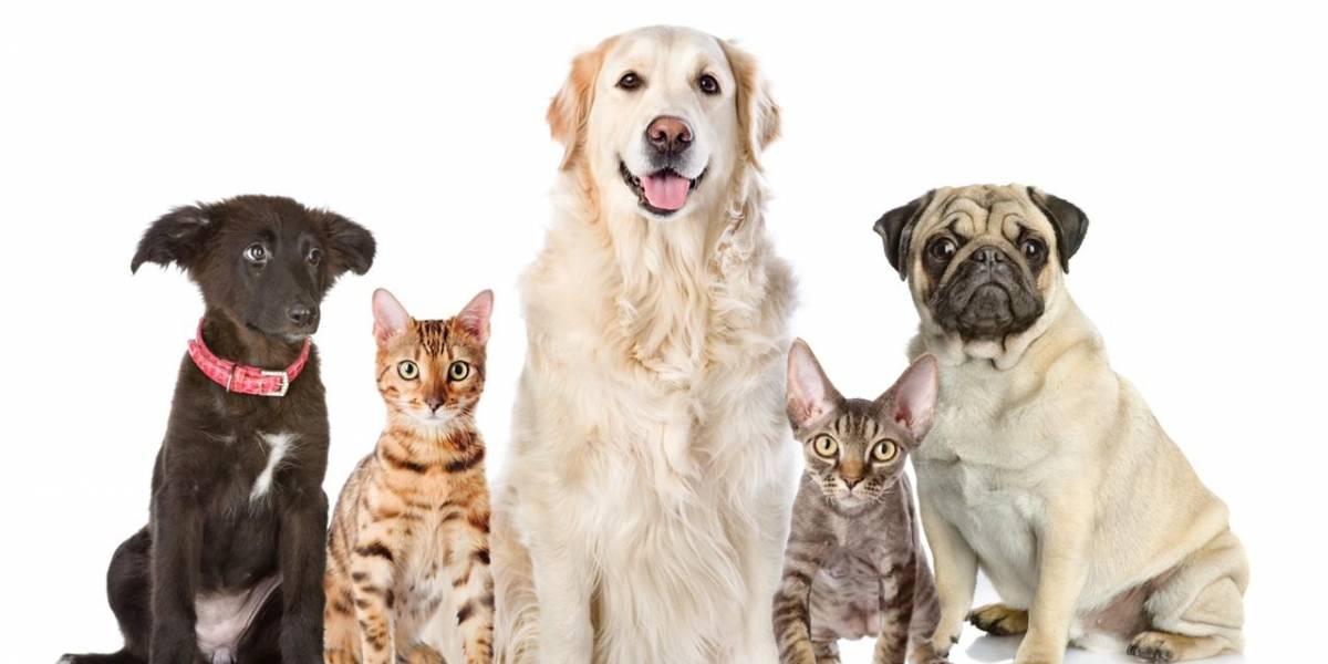¿Pueden las mascotas enfermarse de coronavirus Covid-19?
