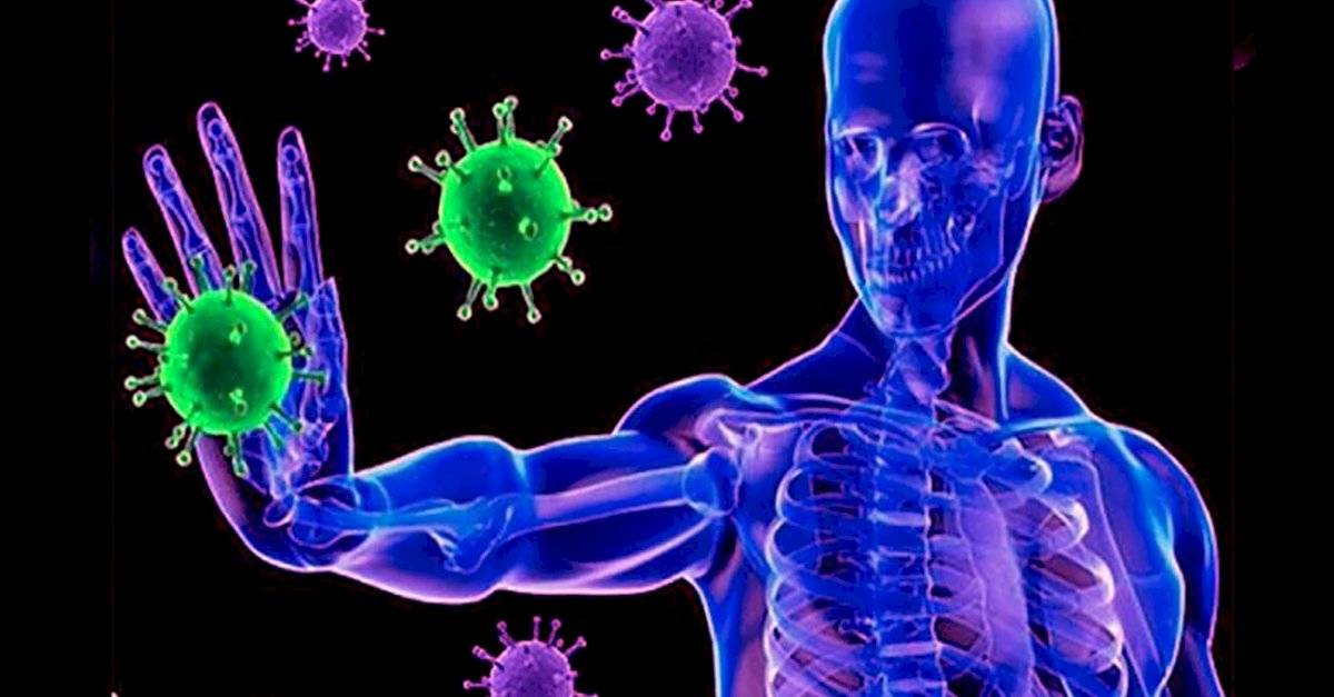 Coronavirus: ¿cómo el sistema inmunológico ataca al COVID-19?