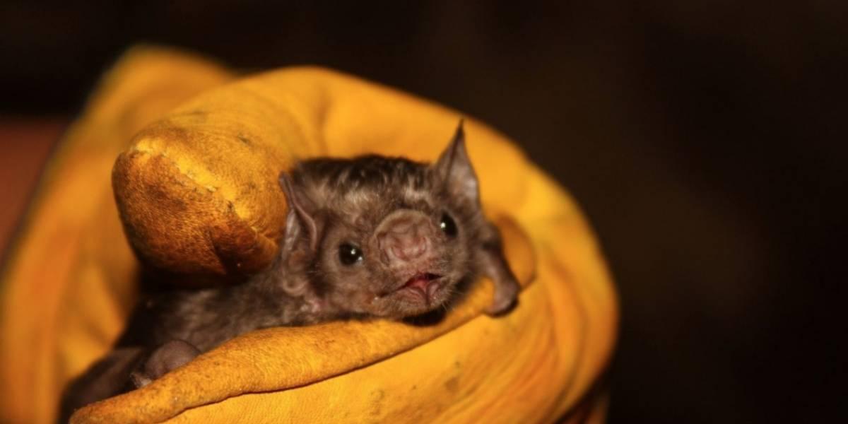 Cientos de murciélagos fueron atacados con fuego por temor al COVID-19: Así fue
