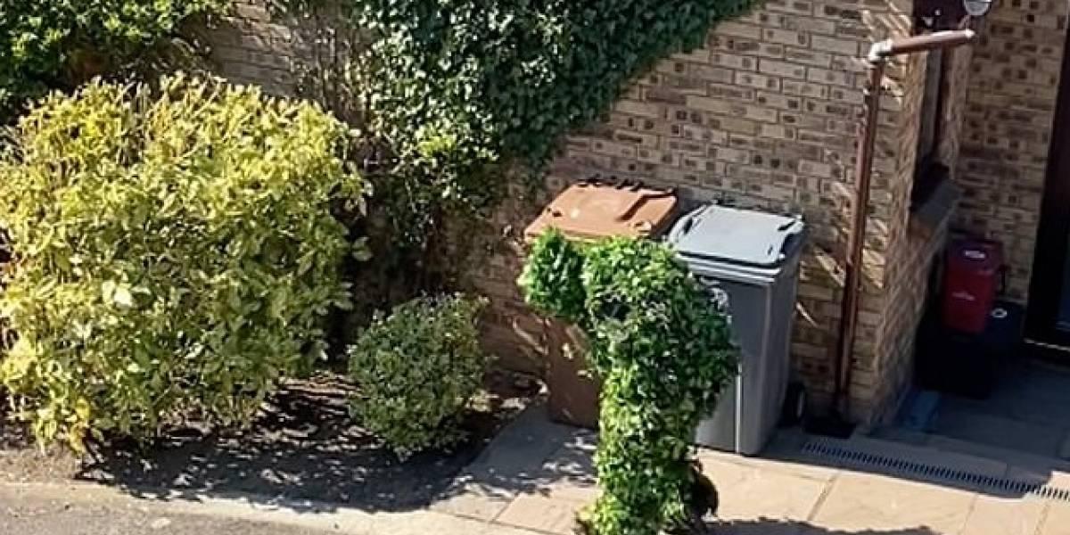 Homem se fantasia de arbusto para driblar a quarentena e vídeo se torna viral