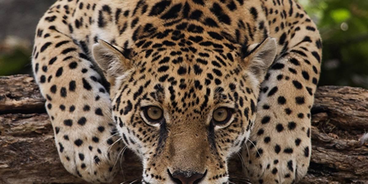 Descubre más sobre el Zoológico de Quito en Facebook e Instagram