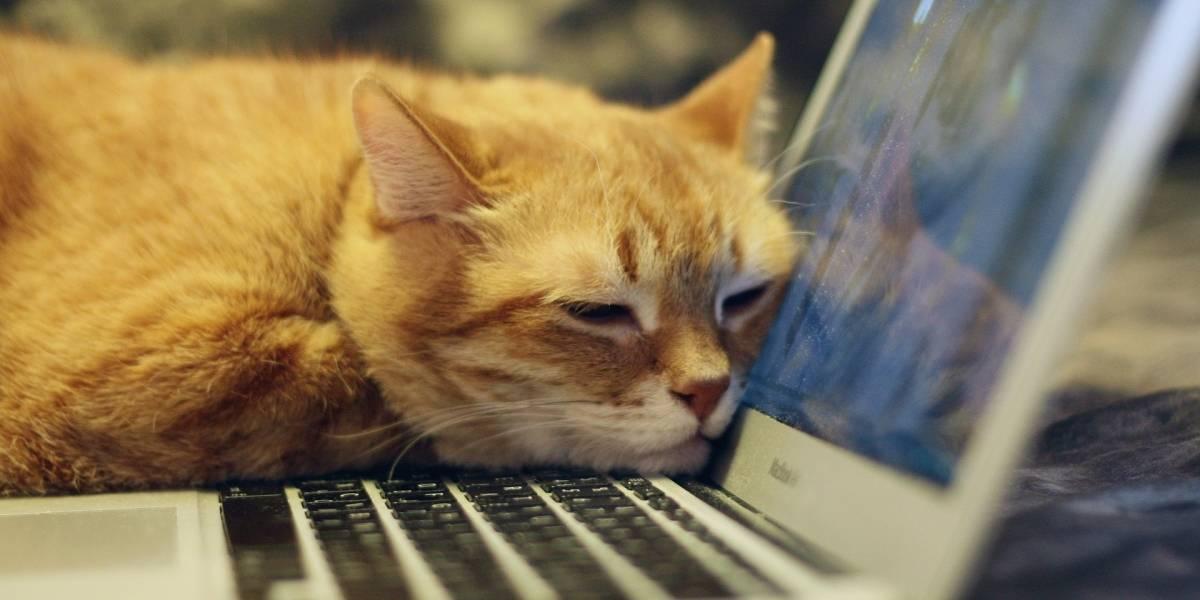 Gata tem reação encantadora ao ver dona por vídeo chamada na quarentena