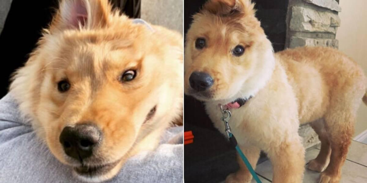 FIlhote de cachorro com orelha na cabeça faz sucesso no Instagram