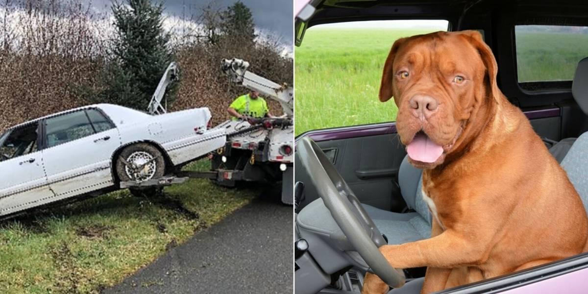 Homem entra em perseguição policial e é preso após tentar ensinar cachorro a dirigir