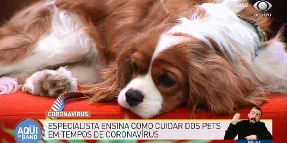 Saiba como cuidar de cães e gatos durante a pandemia de covid-19