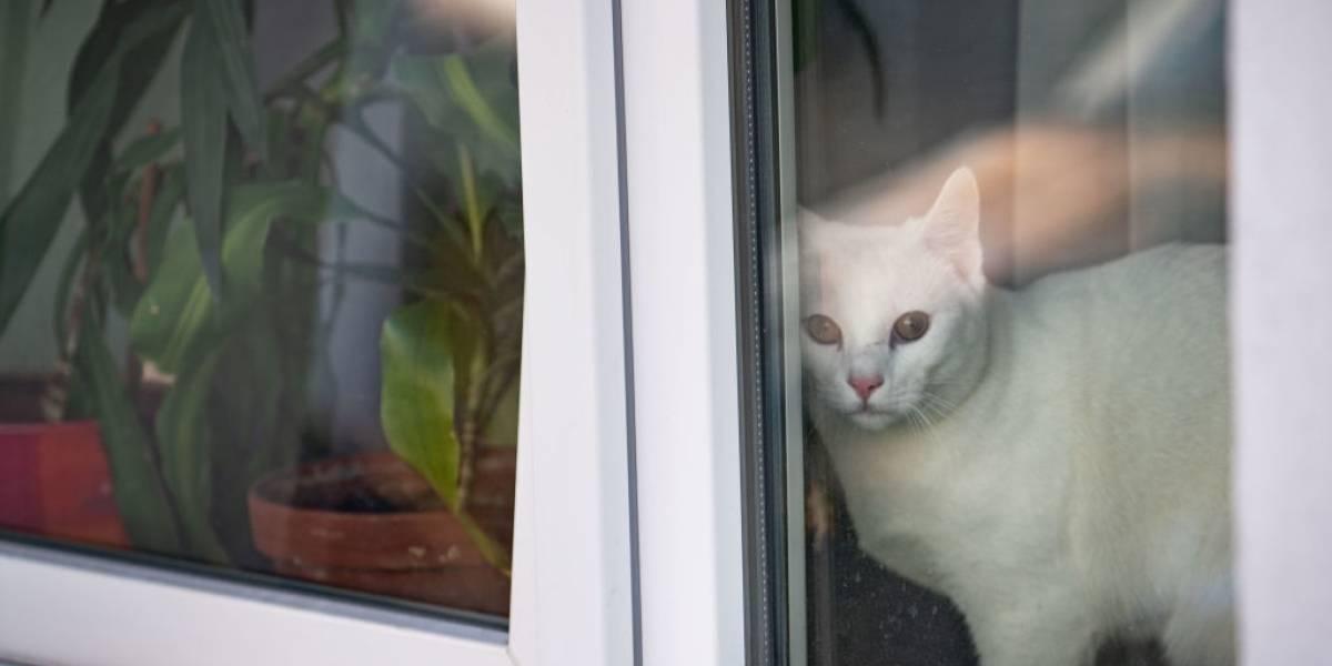 Covid-19: gato é contagiado com coronavírus pelo seu dono