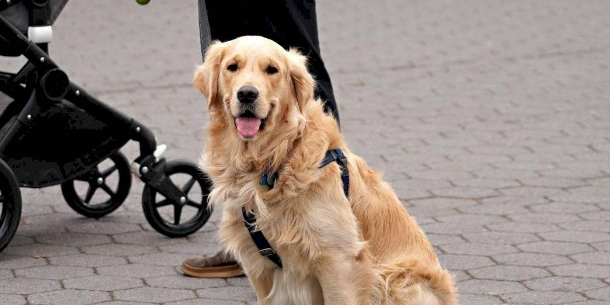 Heroico perro ayuda a vecina enferma en tiempos de cuarentena