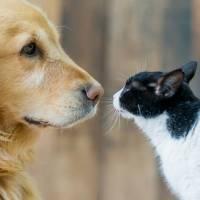 ¿Mis mascotas pueden contagiarme de coronavirus?