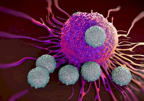 Coronavirus sistema inmune