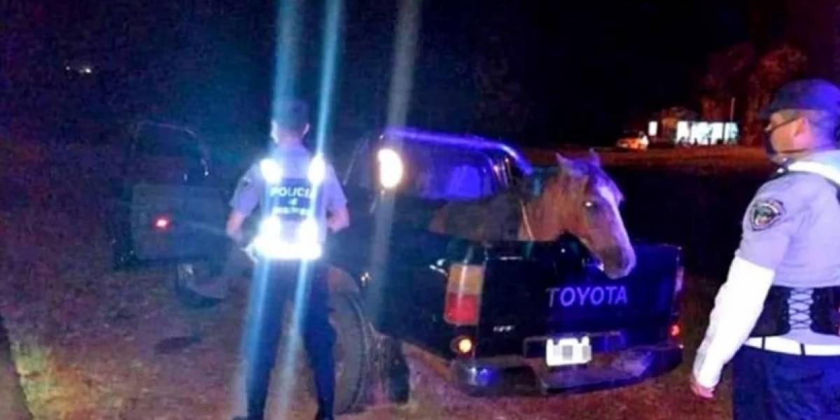 Hombre rompió la cuarentena borracho, según él porque su caballo estaba deprimido