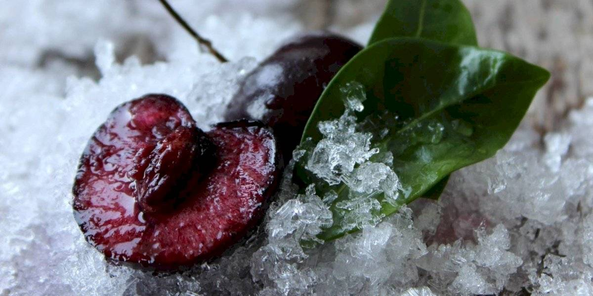 Como congelar alimentos para guardá-los durante a quarentena