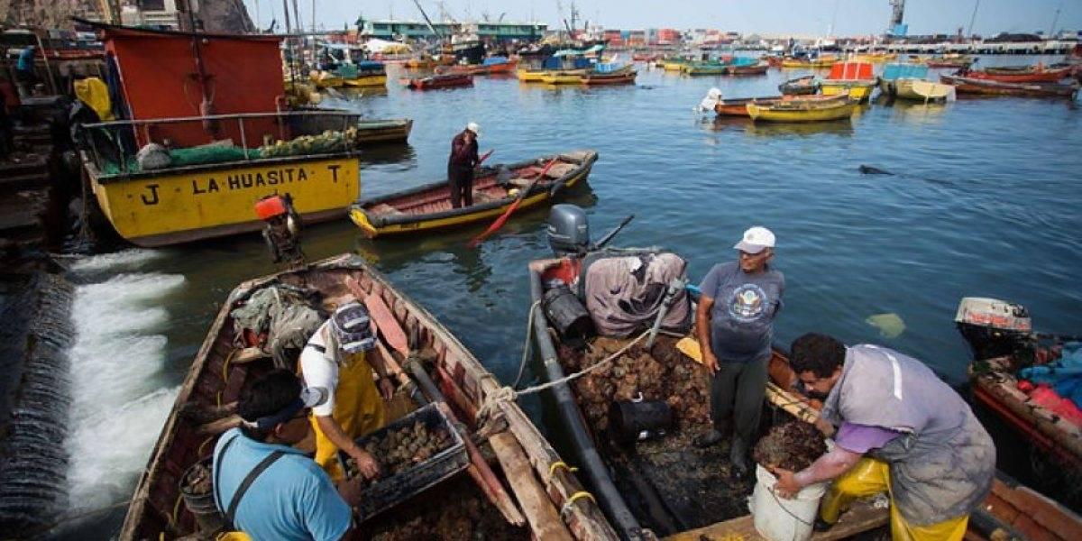 En plena lucha contra el hambre: pescadores artesanales regalan 200 kilos de reineta a pobladores