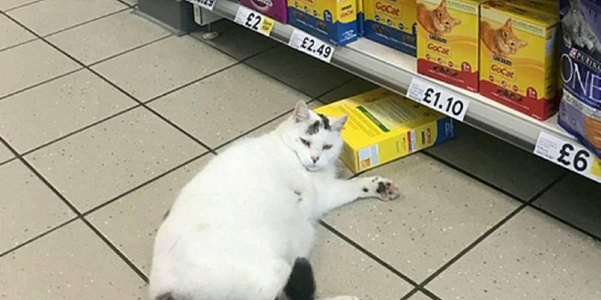 Gato invade mercado para roubar ração e o fim da história é hilária