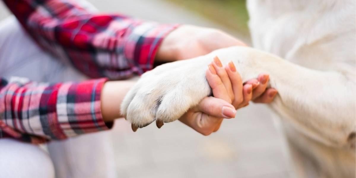¿Cómo desinfectar a tu perro si necesitas salir durante emergencia por COVID-19?