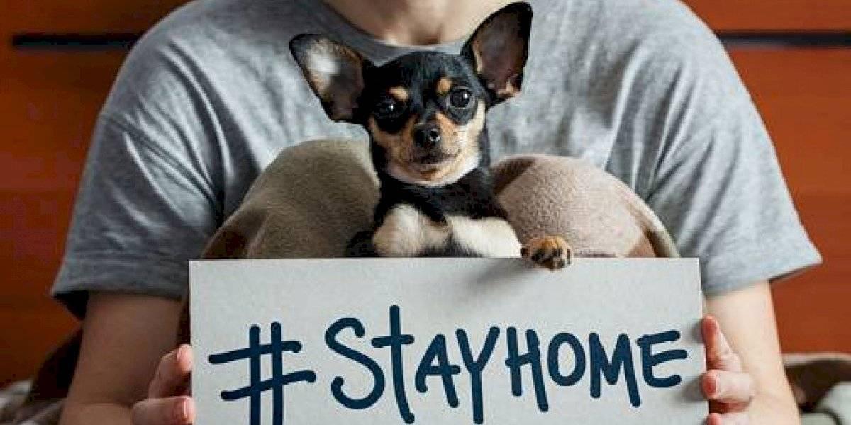 Durante la emergencia sanitaria los animales de compañía no deben salir de su domicilio