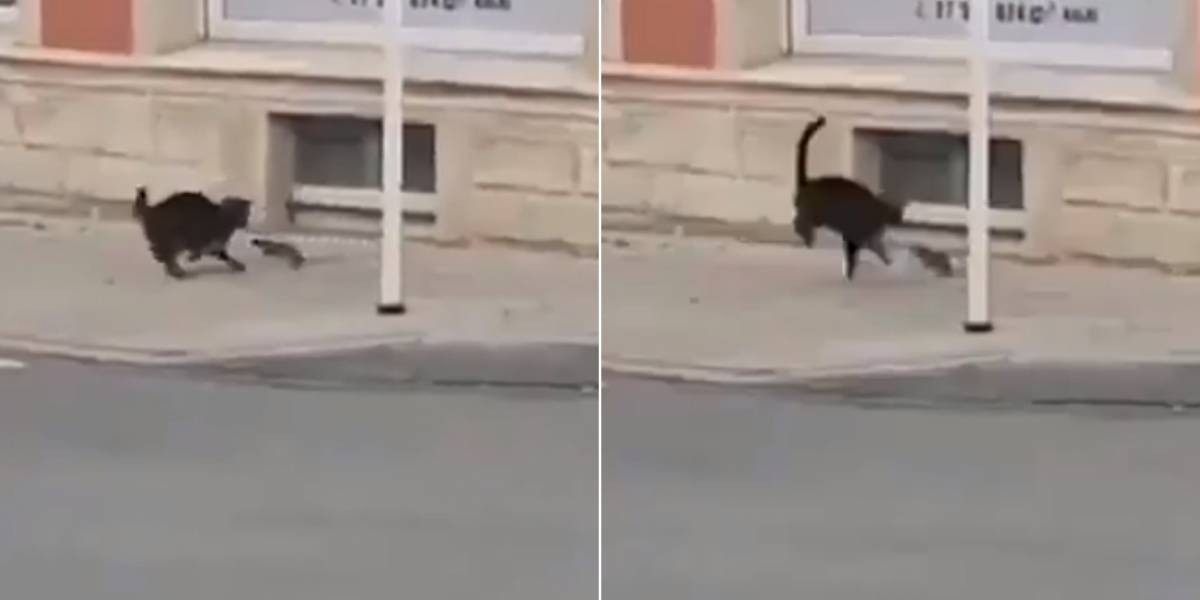 Vídeo que mostra rato perseguindo gato na rua sem descanso faz sucesso nas redes sociais